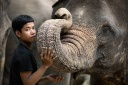 elephant; elephants; indonesia; indonesian; animal; animals;